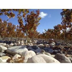 03.Mail Argentiina veinide Meistriklass